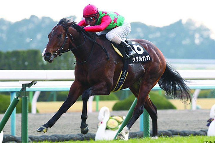 Shigeru Kaga【新種牡馬】