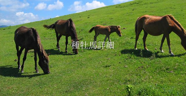 種牡馬詳細