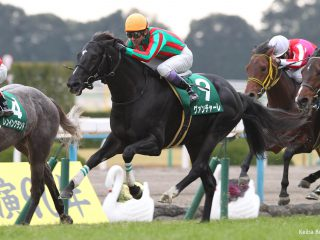 Guanciale【新種牡馬】