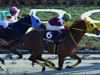 Oval Ace【新種牡馬】